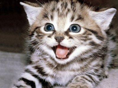 gato-lindo